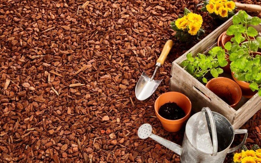 Daugiamečių augalų paruošimas žiemai