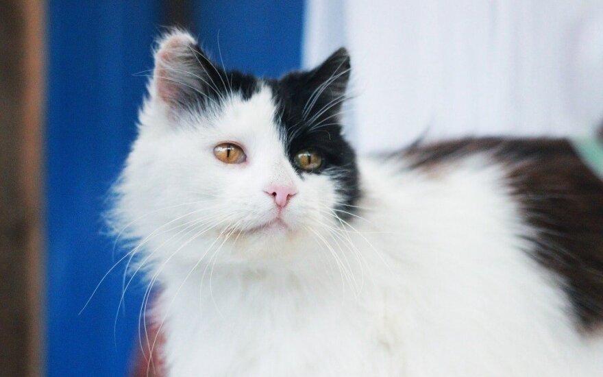 Katė Pirtelė