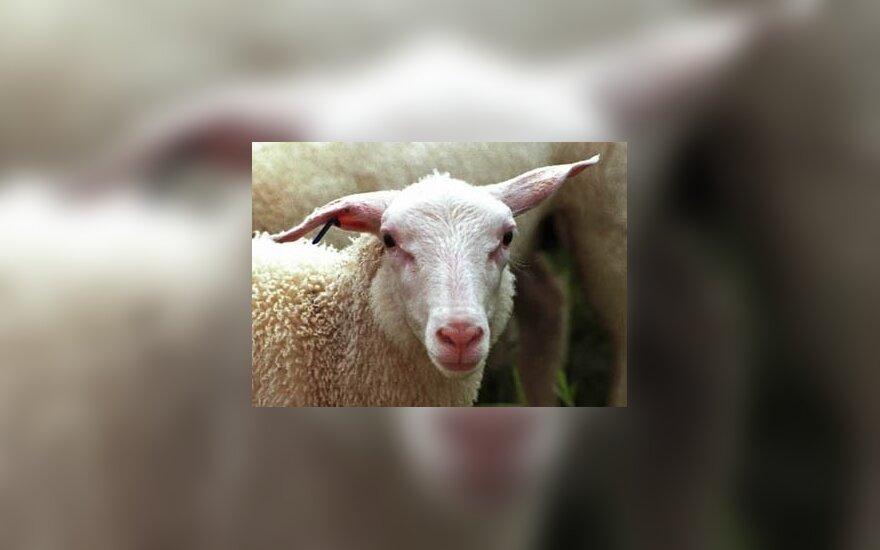 Europarlamentarai siekia uždrausti produktus iš klonuotų gyvūnų