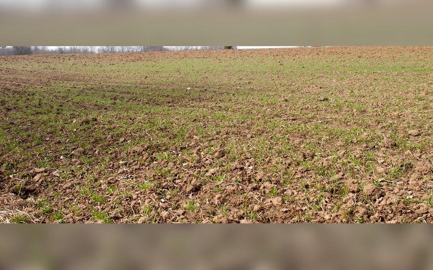 Kodėl pasaulis badauja, o Lietuvos žemės dirvonuoja?