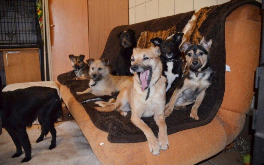 Šuniukai atkeliavę iš Dūkštų ieško gerų namų!