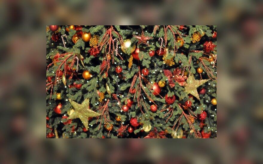Ryga ir Talinas varžosi dėl pirmo Kalėdų eglę pastačiusio miesto titulo