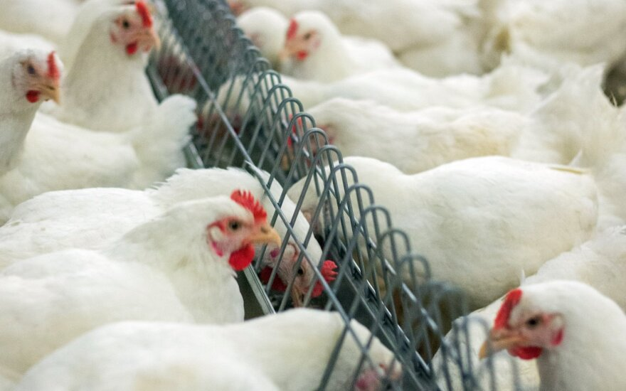 Official: ban on Ukrainian poultry imports won't affect our market