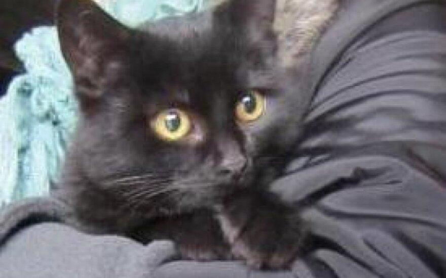 Mieliausia katytė Fauga laukia šeimininko