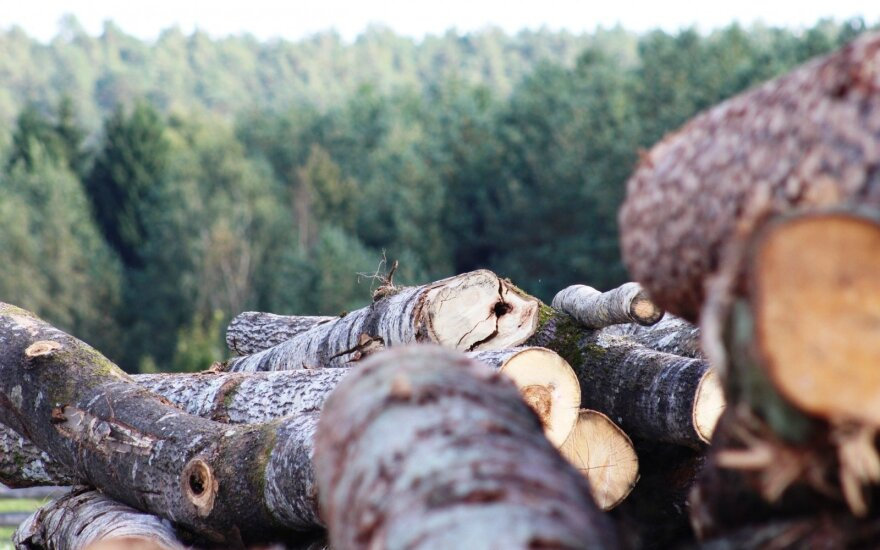 Bioekonomika Lietuvai – tamsus miškas: išvežam, vietoj to, kad kurtume vertę