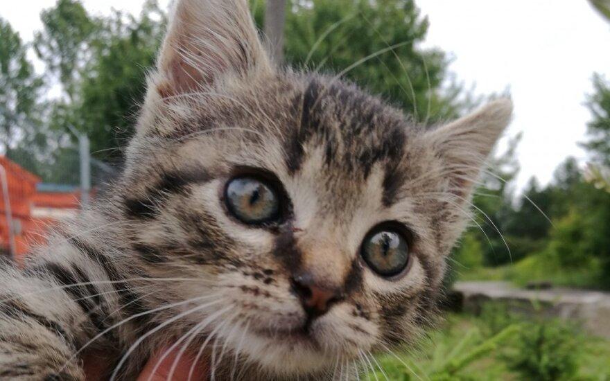 Padėkite kačiukui Sakaliukui nugyventi prasmingą gyvenimą