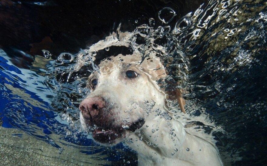 Šuo po vandeniu
