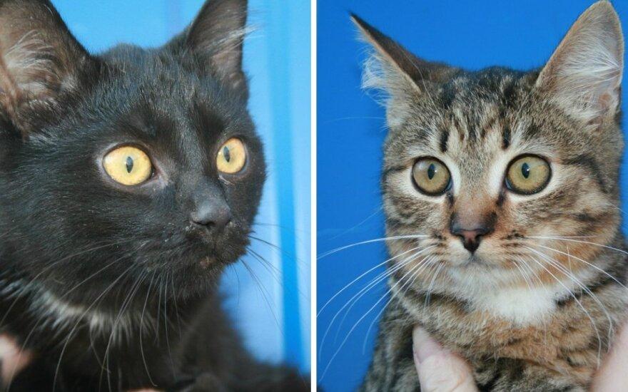 Jų gyvybė pakibo ant plauko: kačiukai ieško namų