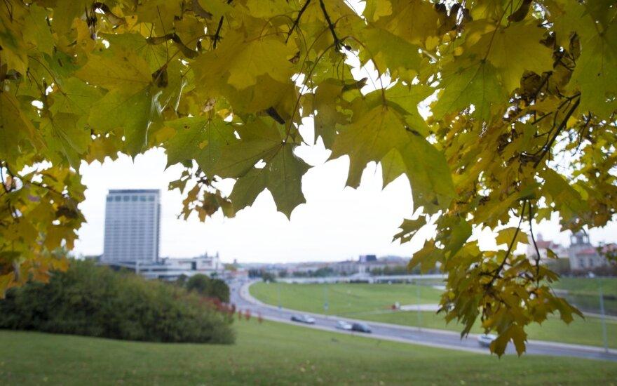 Atkreipė vairuotojų dėmesį: ant rudeninių lapų kelyje – lyg ant ledo
