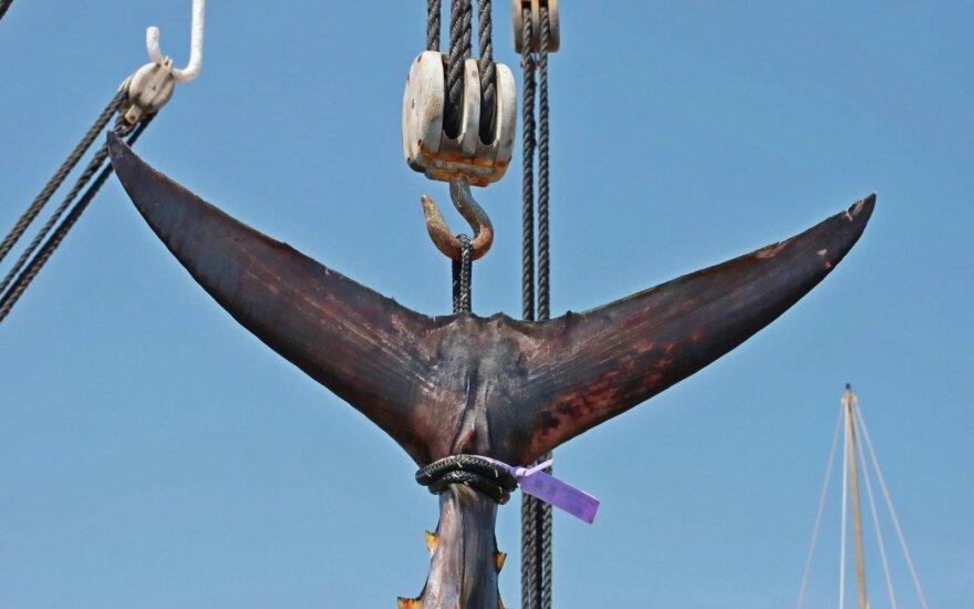 """""""Tuno karaliumi"""" pramintas japonas aukcione nusipirko tuną už 1,6 mln. eurų"""