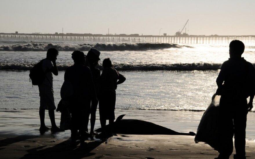 Peru gyventojai stebi bangų išmestą delfiną