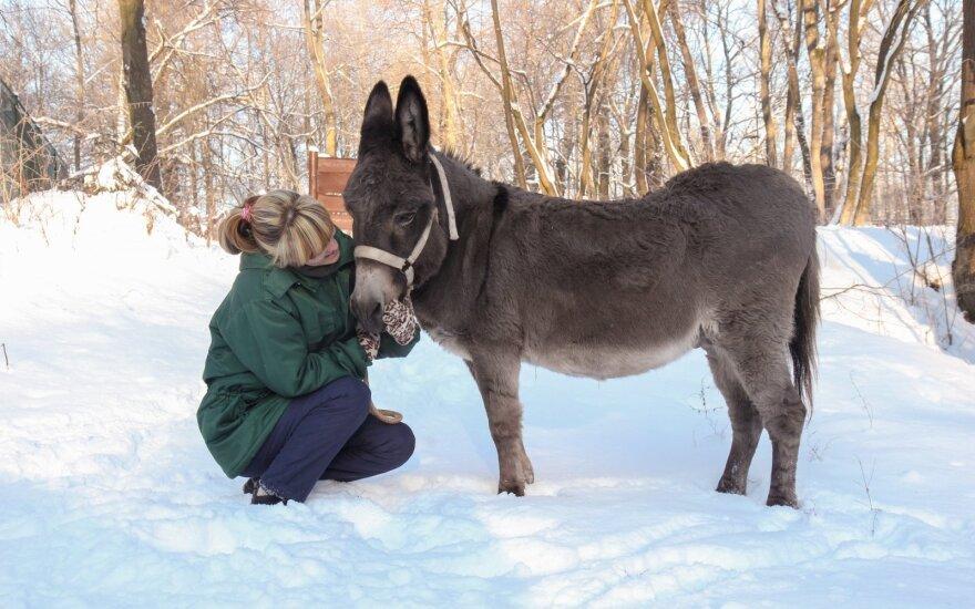 Žiema – tikras išbandymų metas zoologijos sode