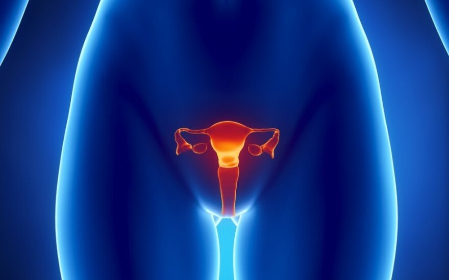 Moters reprodukciniai organai, kiaušidės, kiaušintakiai, gimda