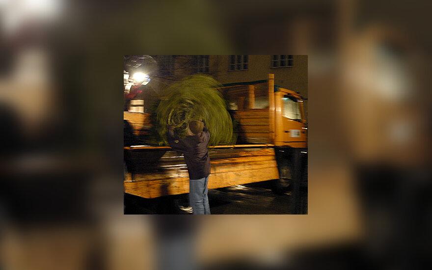 Berniukas krauna eglutę į sunkvežimį