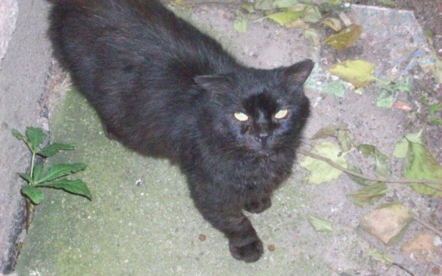 Jaukus katinėlis gatvėje: ieškome jam namų