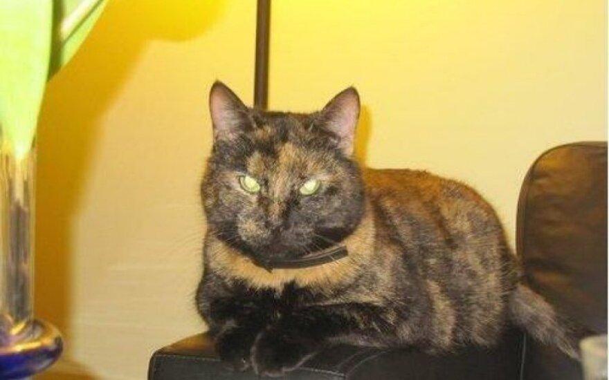 Ištikima katytė Verutė ieško naujų namų