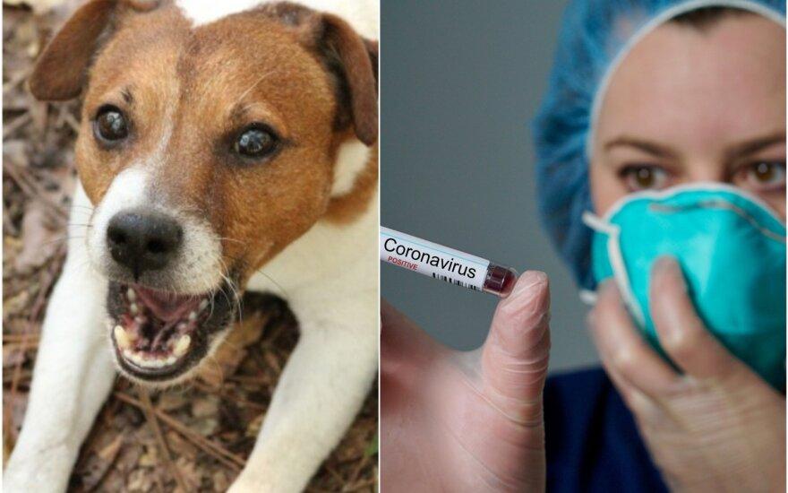 Šuo izoliuotas dėl koronaviruso (asociatyvi nuotr. montažas)