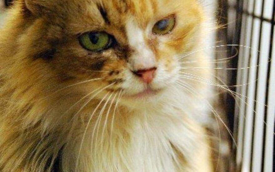 Neris – apsikabinimų katytė