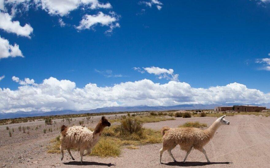 Čilės gamta