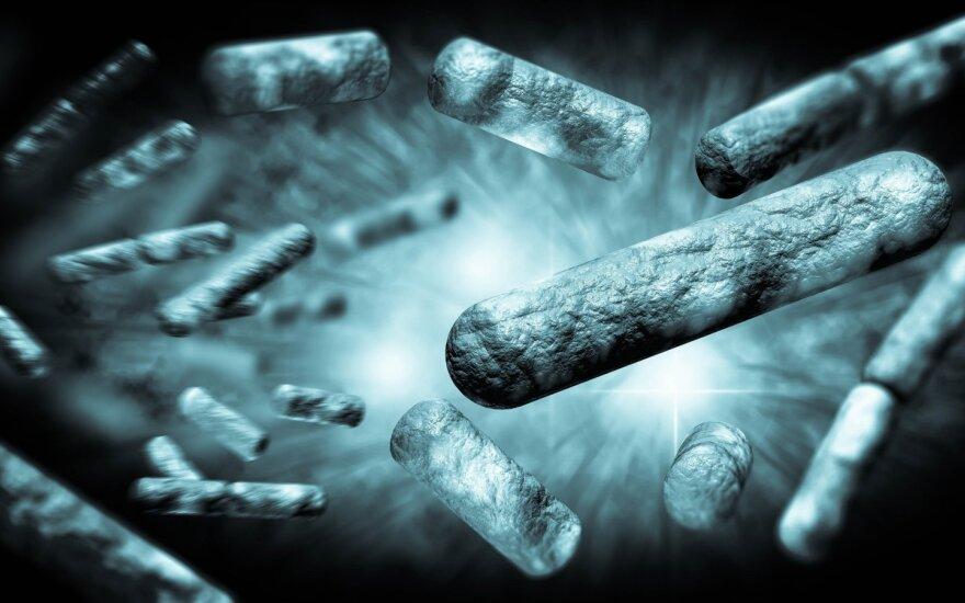 E-coli bakterijos