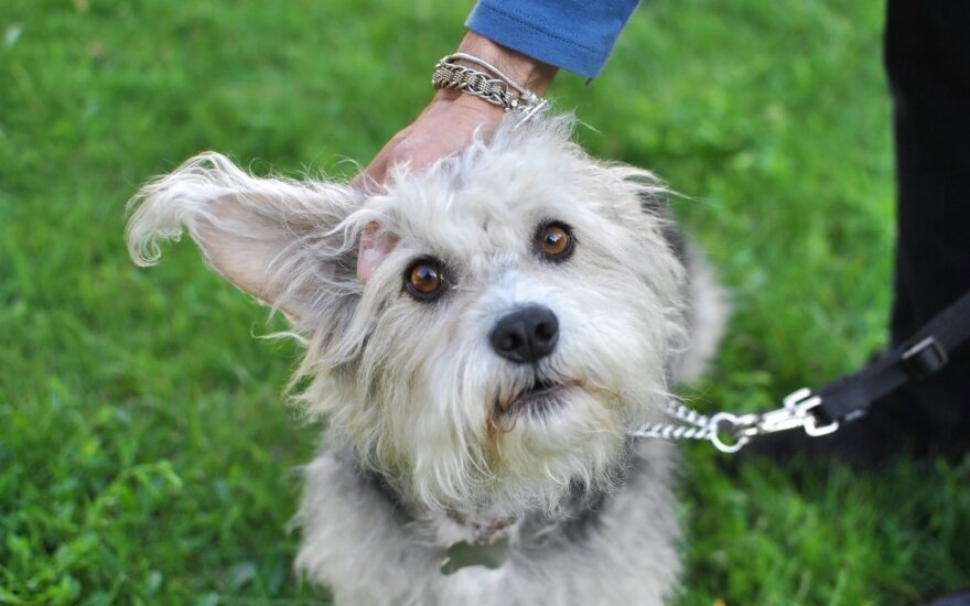 Trys šuneliai namuose: mergina nepabijojo priimti aklo ir kurčio augintinio