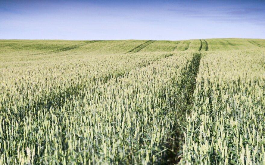 Lietuva gali labai operatyviai reaguoti į pokyčius grūdų eksporto rinkoje