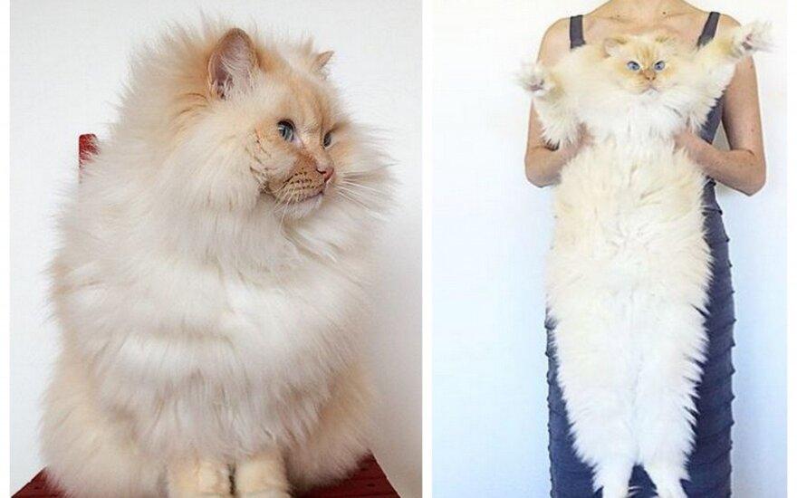 Tokios katės jau seniai nematėme