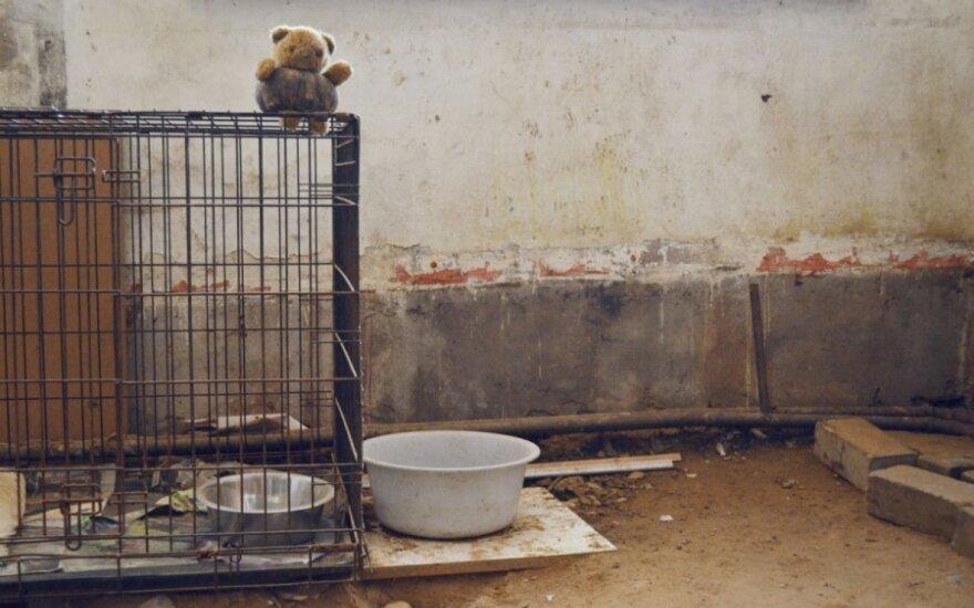 Keturkojai be namų - prieglaudėlė be grindų...