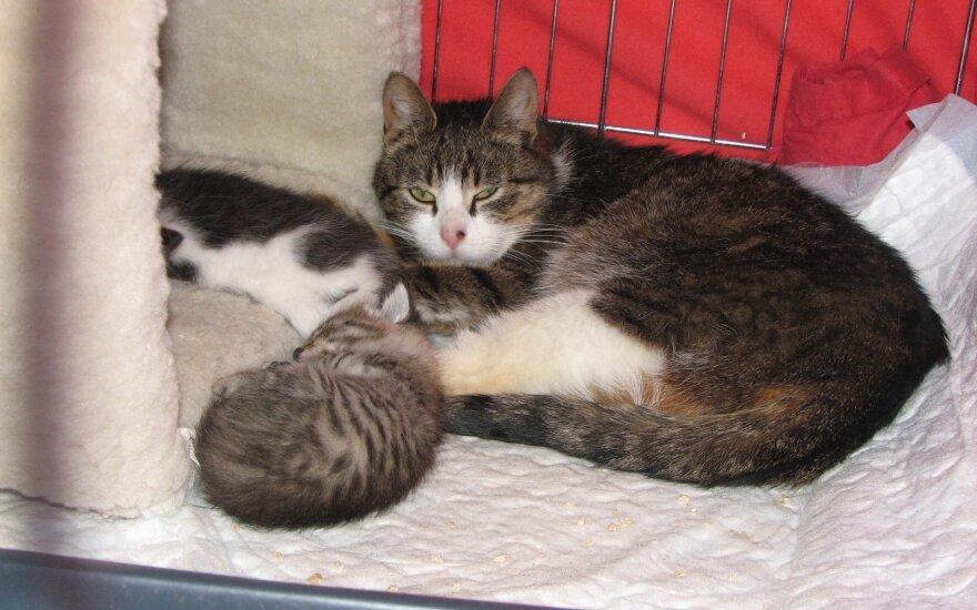 Vipei ir mažiems kačiukams reikia pagalbos