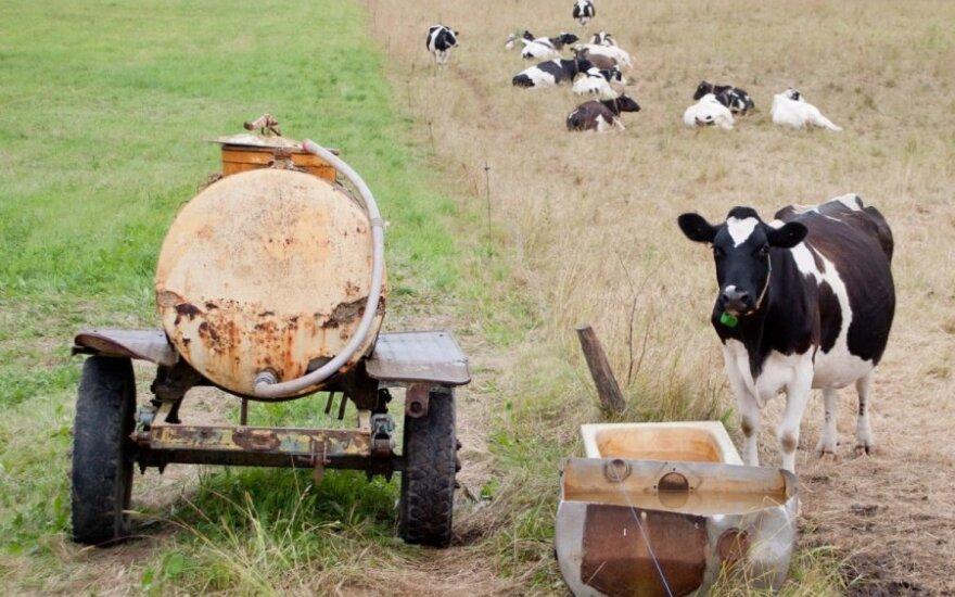 Nauja kaimo realybė – supirkėjas už 480 kg karvę sumokėjo 62 eurus