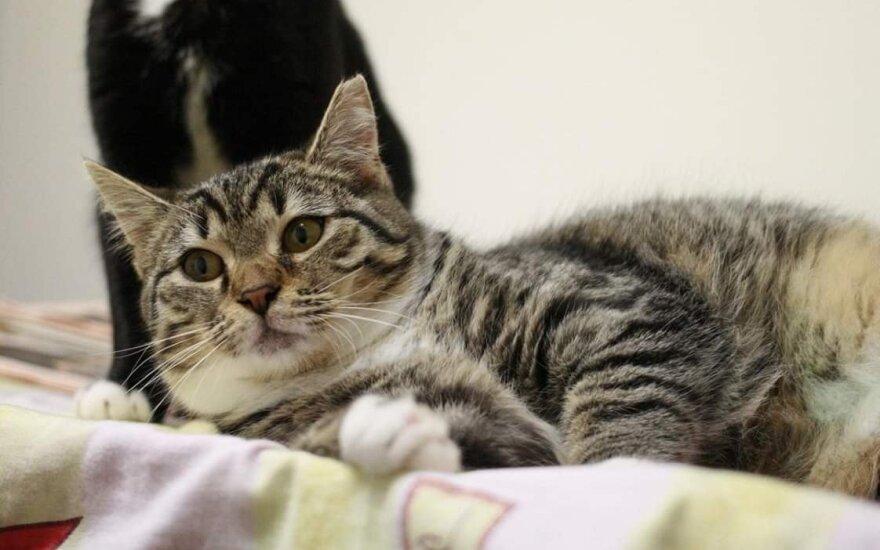 Katytė Liška ieško namų