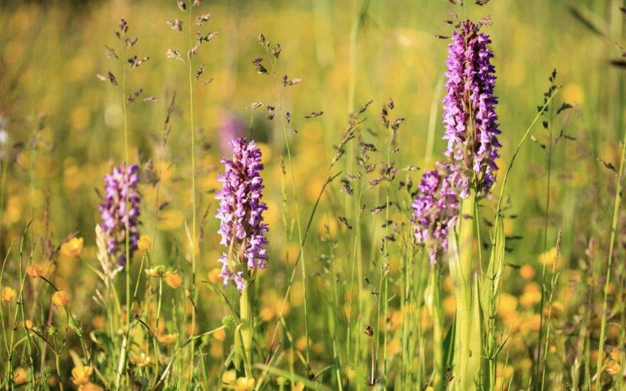 Kviečiame prisijungti prie ūkininkų, saugančių turtingas gamtine įvairove pievas