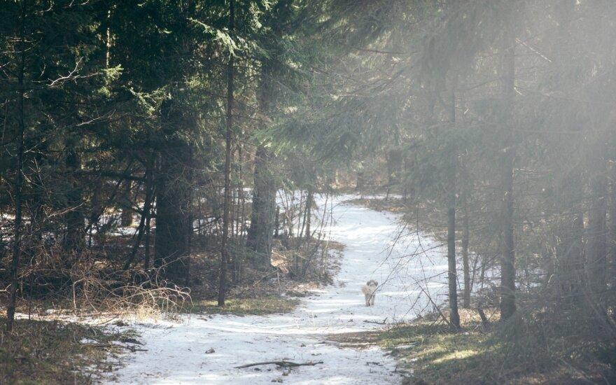Tikrasis pavasaris – jau pakeliui: tuoj po Velykų žadamos staigios orų permainos