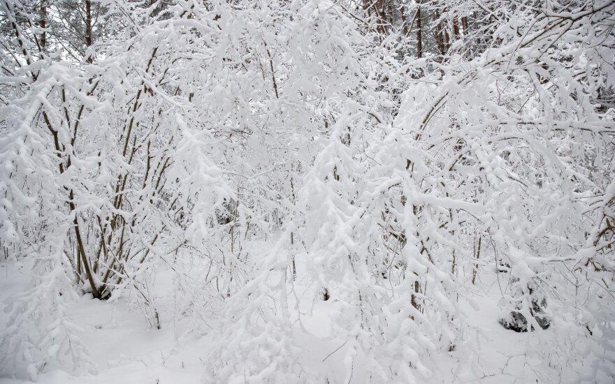 Trys iš keturių lietuvių mano, kad klimato kaita kelia grėsmę jų kartos žmonėms