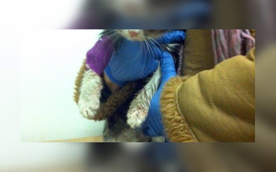 Negalėjome palikti kraujuojančio gyvūno gatvėje: mažylė Maša prašo globos ir paramos