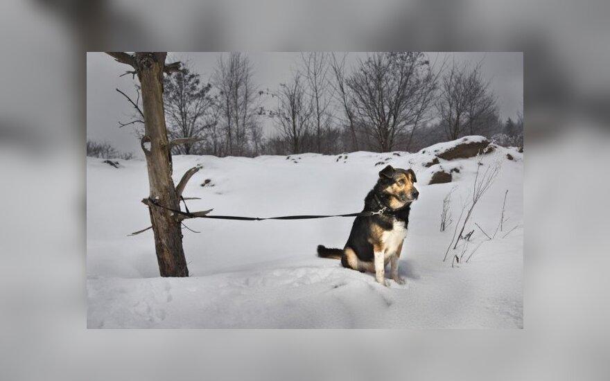 Šuo žiemą / G. Trečioko nuotr.