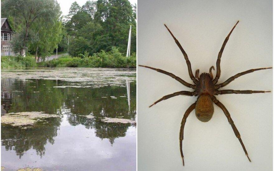 Voras, kuris gyvena vandenyje