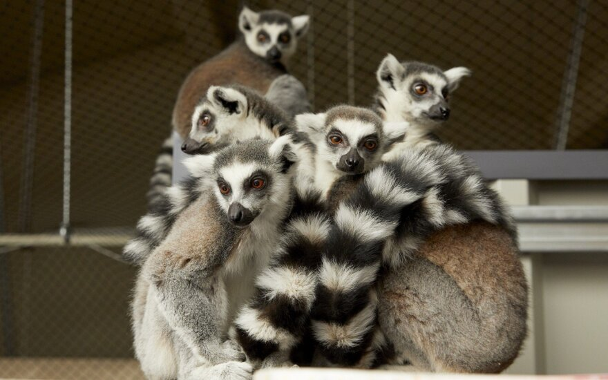 """""""Zoopark"""" gyvūnai"""
