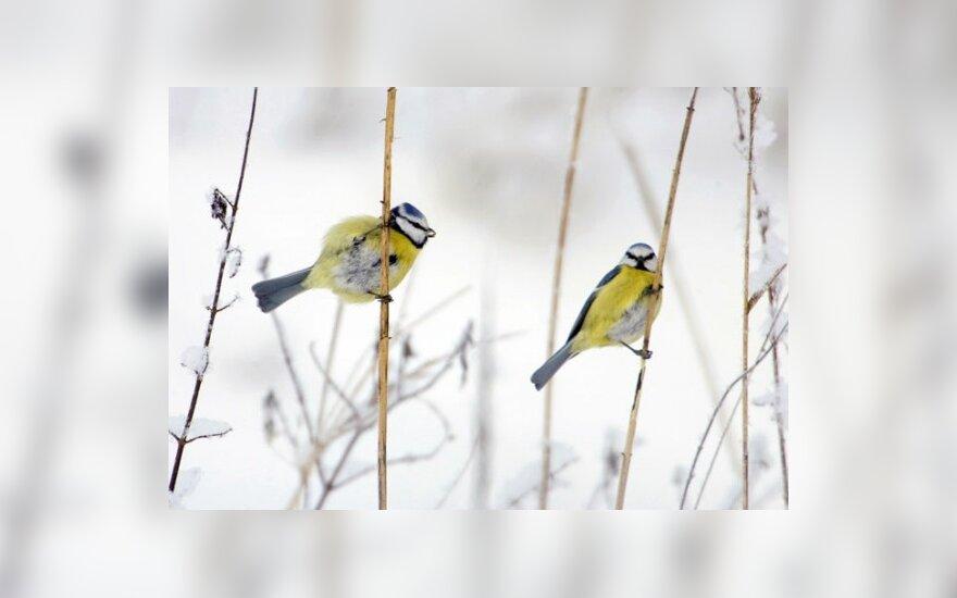 Paukščiams reikia pagalbos
