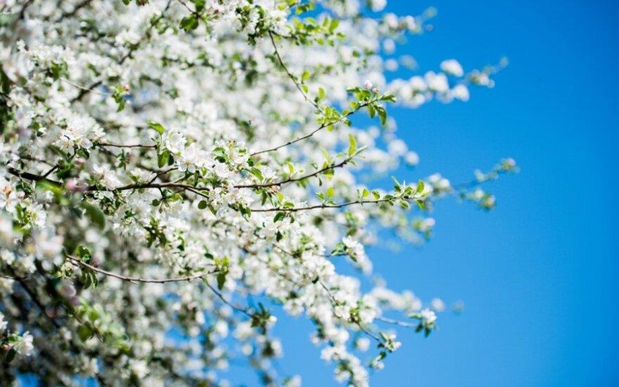 Šią savaitę laukia kol kas šilčiausia pavasario diena: iškart po jos – nemalonios permainos