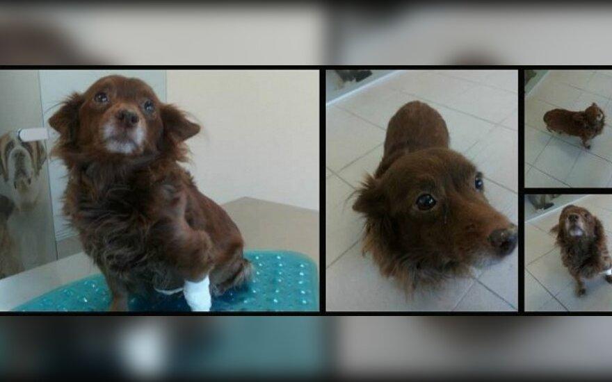Šuo neėda - gydome eutanazija?