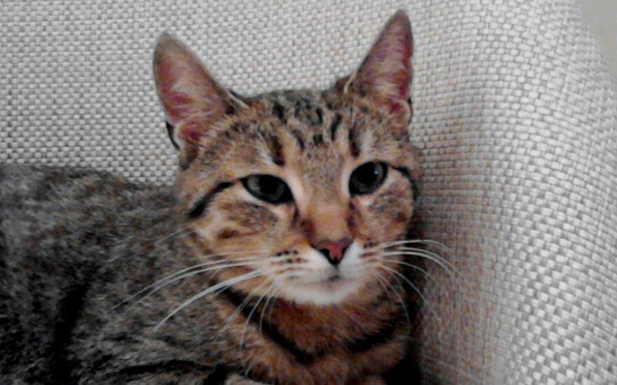 Ariša: paprastutė lietuviška katytė