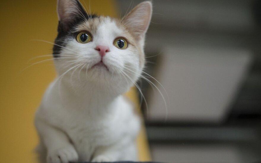 Nuostabi katytė Šeltė nori būti pastebėta: ieško šeimininkų!