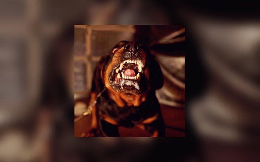 Agresija, šuo