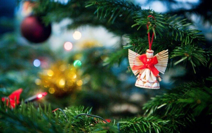 Kaip išsirinkti geriausią Kalėdų eglutę