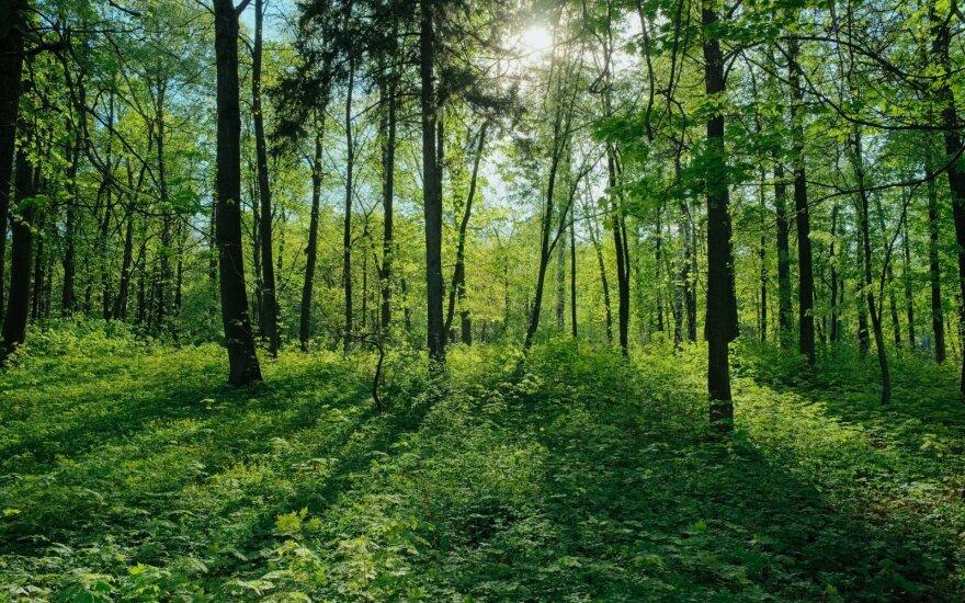 Latvija miško pramonės produkcijos eksportą 2019-aisiais sumažino 2 proc.