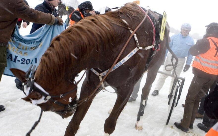 """Žiemos linksmybių – į """"Sartus 2012"""""""