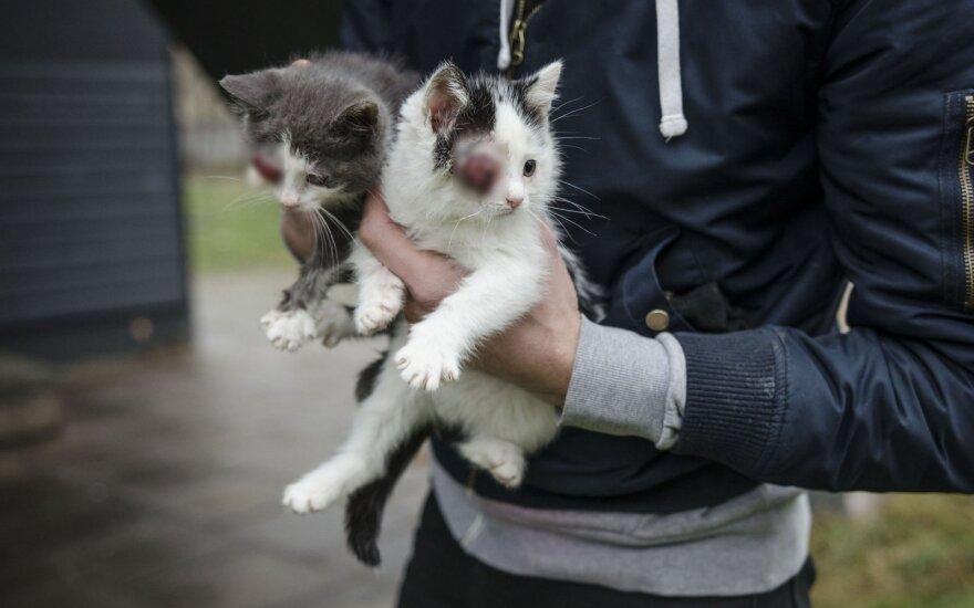 Visko mačiusius savanorius pribloškė pamatyta trijų kačiukų būklė