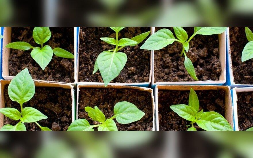 Pavasariniai sodo darbai: kaip pasigaminti komposto ir kiti naudingi patarimai