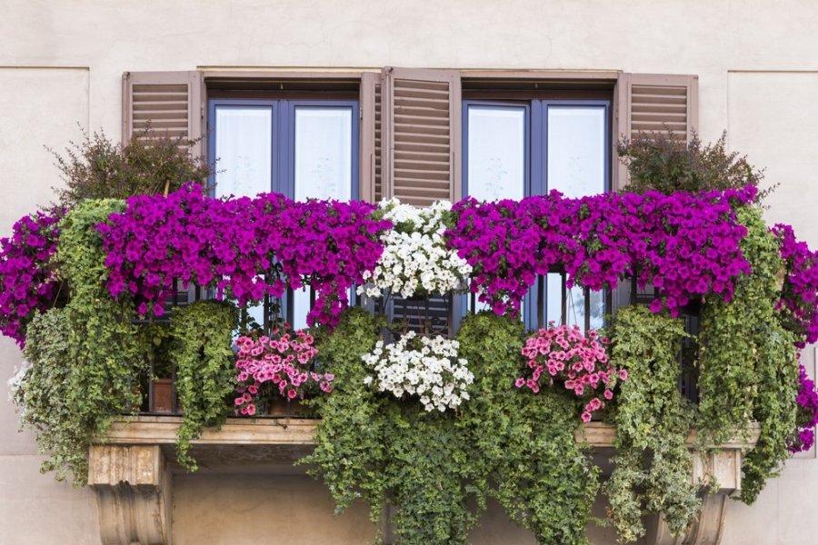 Patarimai kaip gra iai suderinti g li kompozicijos for Plantes de balcon en hiver